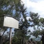 旗立松・展望台