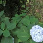 山崎の自然