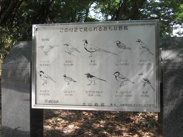山崎の野鳥