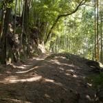 天王山 竹林のこみち