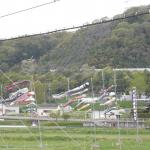 2015年 島本駅前 桜井のレンゲ畑開園 4月18日(土)〜5月6日(水)の期間です。