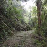 【重要】天王山ハイキングコースを全面通行禁止 10月23日~復旧まで