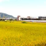 「JR島本駅西地区における都市計画概略案」に係る意見を募集しています!! 2018年1月29日(月)まで