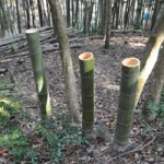 天王山竹林の伐採ボランティア参加者募集中
