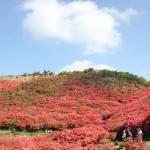 「天王山にツツジを植栽する会」結成へ
