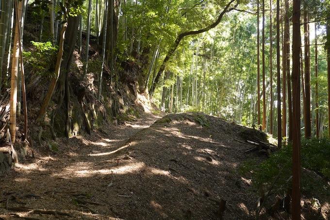 竹林のこみち
