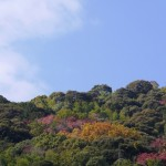 天王山の自然と遊びませんか! 令和元年度森林ボランティア養成講座開催!