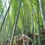 「天王山の歴史散歩と筍掘り体験」 2016年4月24日(日)に 阪急京都沿線 観光あるき