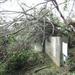 台風21号被害に係る、天王山ハイキング道復旧のためのご寄附のお願い(※大山崎町外の方向け)